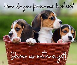 beagle, puppies, hostess, gif